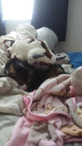 My Cat on a bed